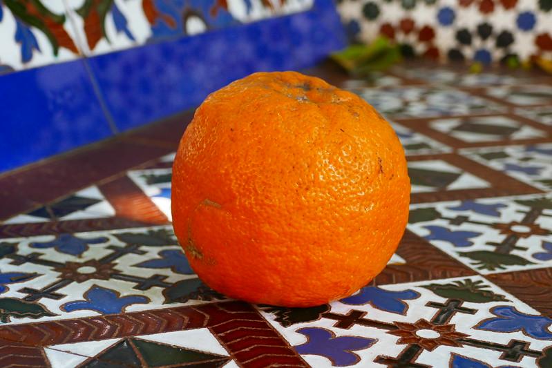 A fallen orange on a park bench in Seville, Spain.