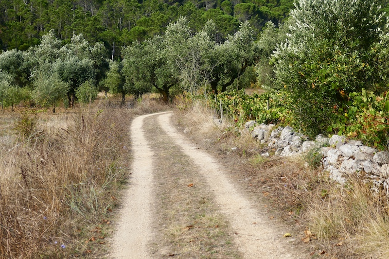 A typically empty section of the camino during the pandemic