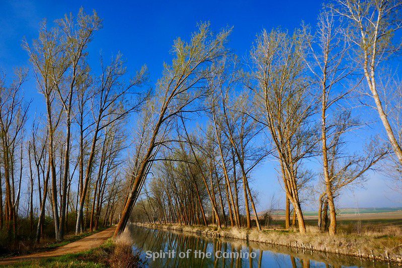 The camino path alongside the Canal de Castilla on the Camino de Madrid.
