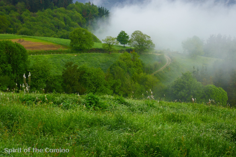 Morning fog beginning to clear in the early stages of the Hospitales climb on the Camino Primitivo.