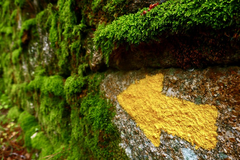 A moss-covered stone wall in the forests of Galicia, with the Camino de Santiago ever present.